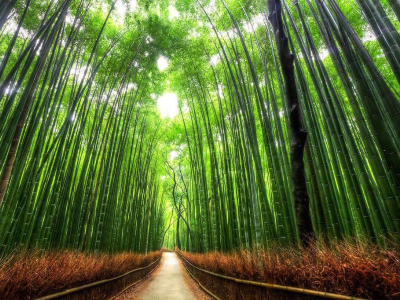 Le fabuleux quartier de Arashiyama à côté de Kyoto
