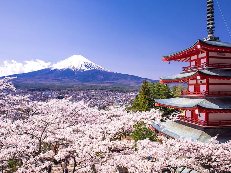 Hamani, le festival des cerisiers en fleurs au Japon