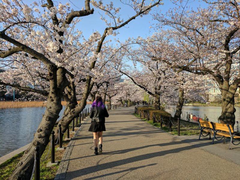 Voyage au Japon : 3 incontournables à ne pas rater à Tokyo
